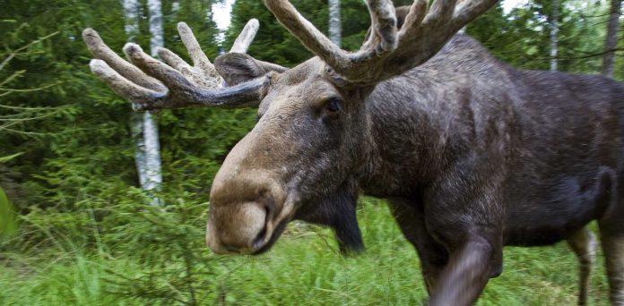 nature-sweden-arrangers-destination-management